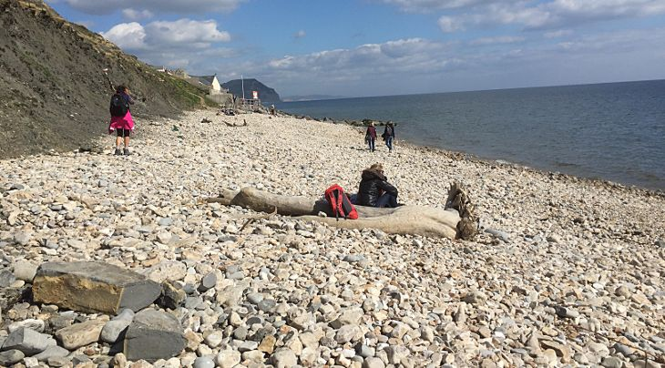 fossil hunting at charmouth