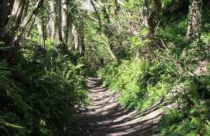 a dorset holloways footpath