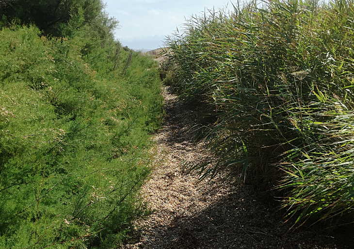 a section of the south west coast path