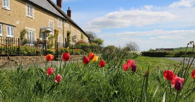 flowers and thatch cottages