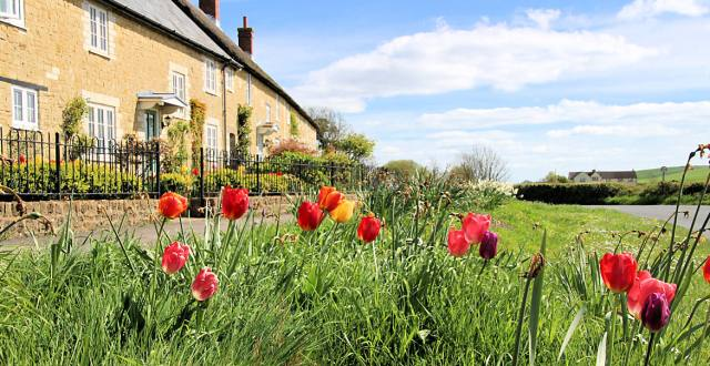 Tulips and thatch roof cottages